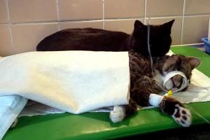 В Польше появился кот-медбрат