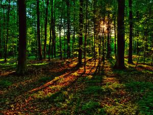 На собранные через интернет деньги посадят деревья
